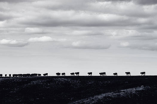 Til The Cows Come Home by Debi Bishop