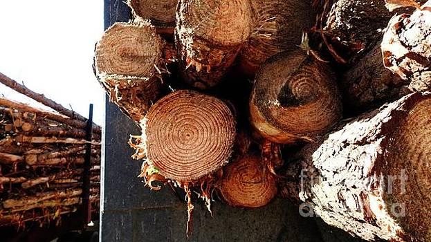 Timber -  n1163 by Ella Kaye Dickey