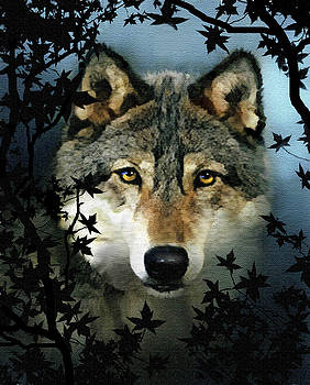 Timber Wolf by Robert Foster