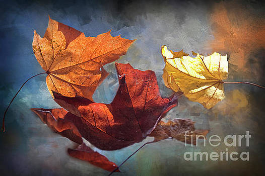 Time And Patience - Autumn Leaves by Janie Johnson