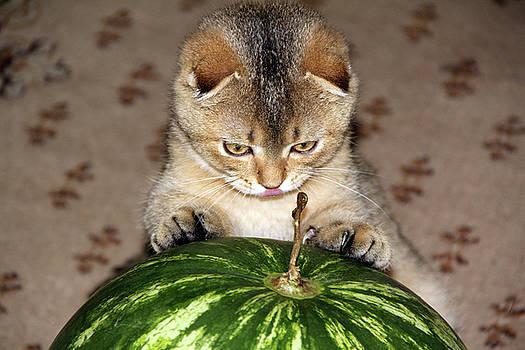 Timothy and watermelon by Sergey Lukashin