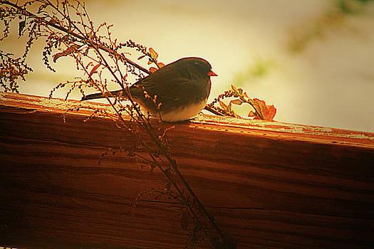 Darlene Bell - Tiny Bird