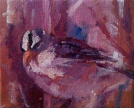 Tiny Bird Study #1 by Brian Kardell