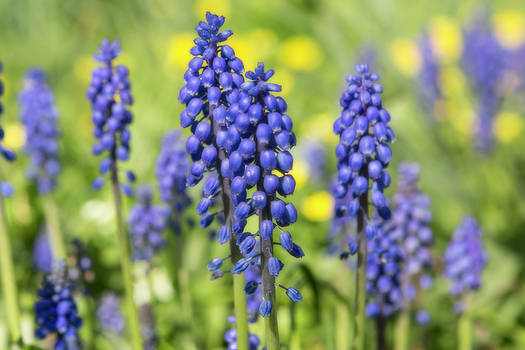 Tiny Blue Flowers by David Hare