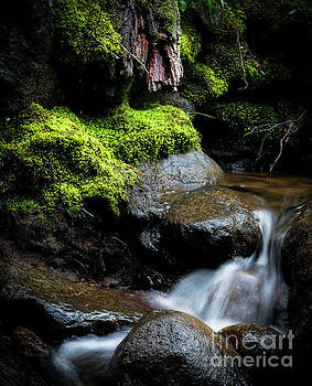 Tiny Cascade by The Forests Edge Photography - Diane Sandoval