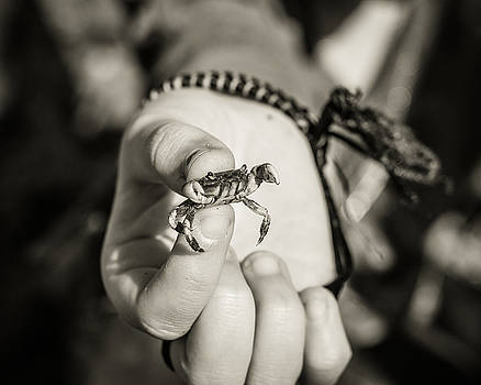 Tiny Crab in Black and White by Sarah Beth Smith