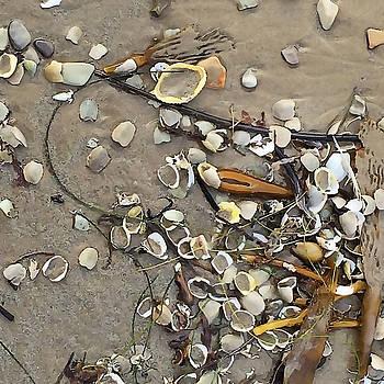 Art Block Collections - Tiny Crab Shells