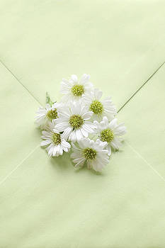 Tiny Daisies on Green Envelope by Di Kerpan