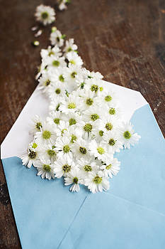 Tiny Daisies Spilling From Blue Envelope by Di Kerpan
