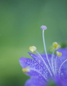 Guy Shultz - Tiny Flower