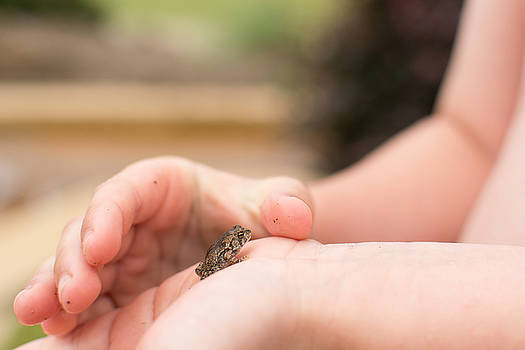 Tiny Frog by Emily Smith
