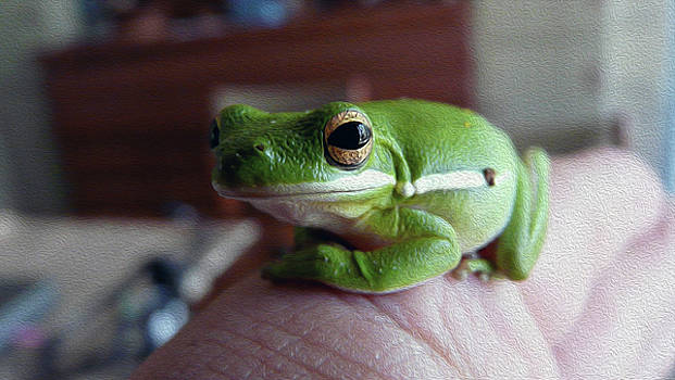Tiny Frog by Eye Browses