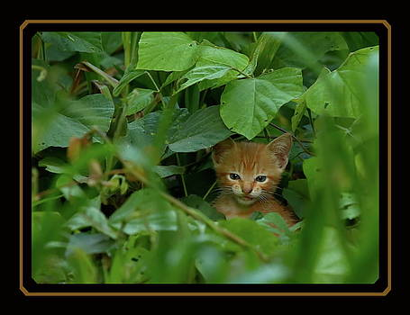 Tiny lion in a big jungle by BYETPhotography