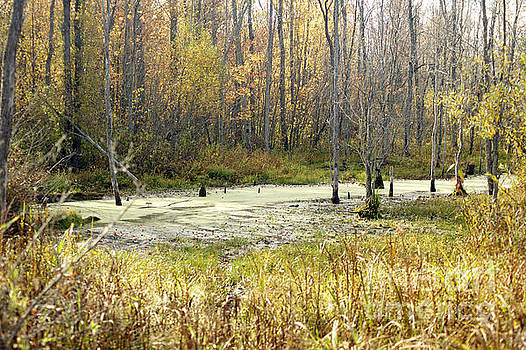 Elaine Mikkelstrup - Tiny Marsh in Autumn