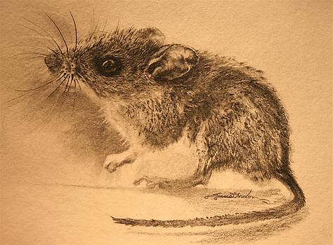 Tiny Mouse by Susie Gordon