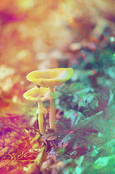 Kids Tiny Bright Woodland Mushrooms  by Suzanne Powers
