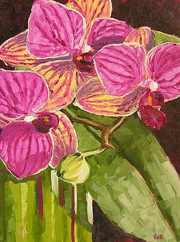 Tiny Orchid by Mary McInnis