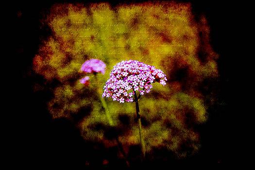 Milena Ilieva - Tiny purple beauties