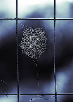 Tiny Spider Web in Blue by Brooke T Ryan