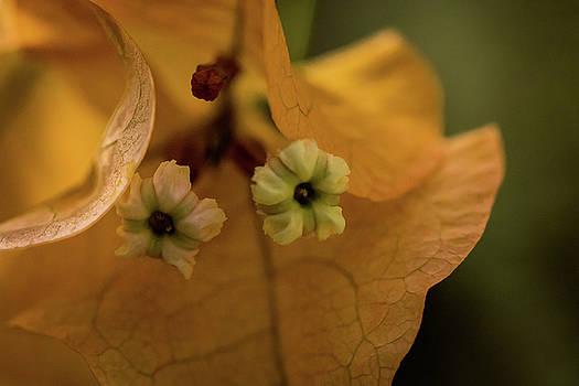 Tiny Tree Flowers by Jay Stockhaus