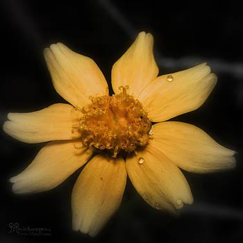 Karen Musick - Tiny Yellow Wild Flower