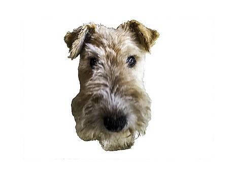Tipper the Fox Terrier by Charles Kraus