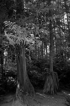 Rosanne Jordan - Tippy Toe Trees