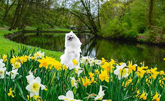 Tiptoe through the Daffodils by Cynthia Leaphart