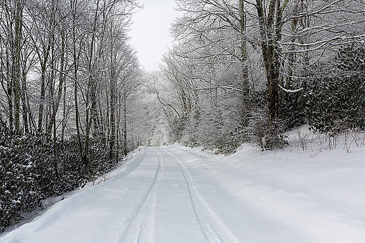 Tire Tracks In Fresh Snow by D K Wall