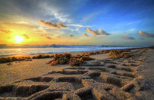 Tire Tracks in Sand Sunrise by R Scott Duncan