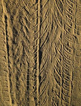 Tire Tracks by R  Allen Swezey