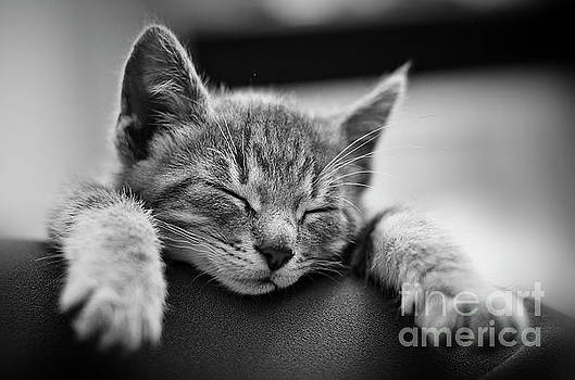Tired .... so tired by Alessandro Giorgi Art Photography
