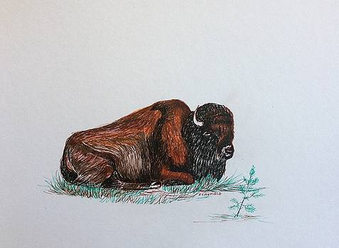 Tired Bison by Ellen Canfield