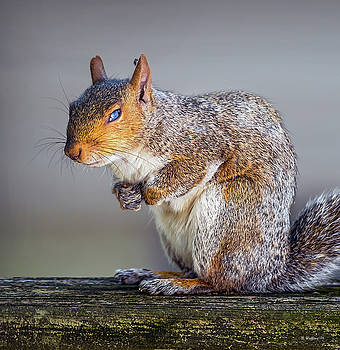 Tired Squirrel And Fly by Brian Wallace