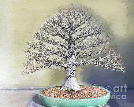 To Admire a Beech in Winter by Marilyn Cornwell