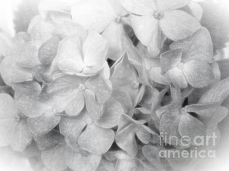 To Have and To Hold - Hydrangea BW Closeup by Ella Kaye Dickey