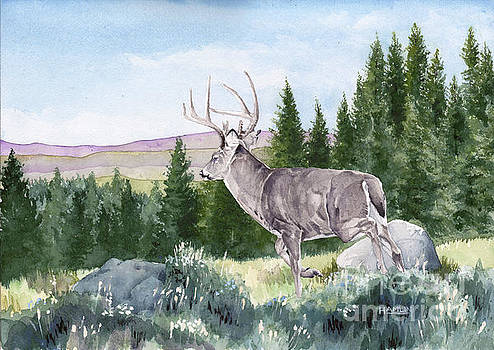 To the Woods-Whitetail Deer by Steve Hamlin