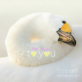 To You #001 by Tatsuya Atarashi