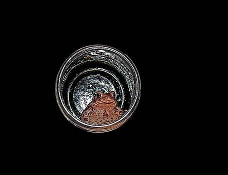 Toad in a Jar by Stuart Harrison
