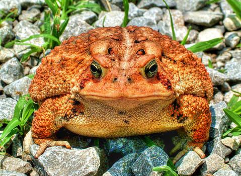 Sam Davis Johnson - Toad
