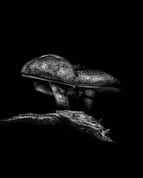 Toadstools On A Toronto Trail No 4 by Brian Carson
