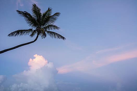 Tobago Palm by Greg Vaughn