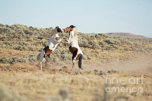 Tobiano Brothers by Terri Cage