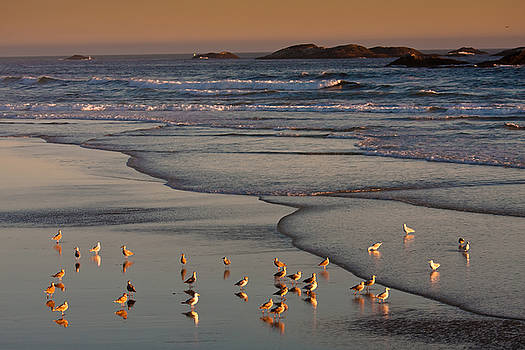 Tofino Sunset 2 by Xin Cheng