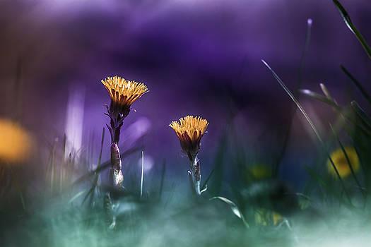 Together by Bulik Elena