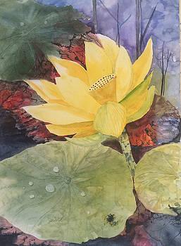 Tohopekaliga Lotus 2 by Glen Ward