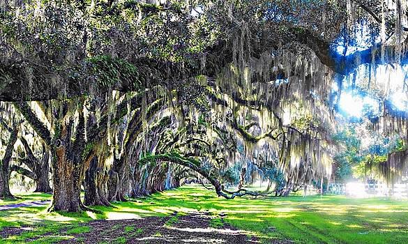 Tomatley Oaks by William Bosley