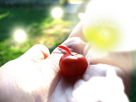 Tomato by Ana Popescu