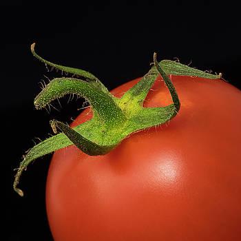 Vyacheslav Isaev - Tomato close-up