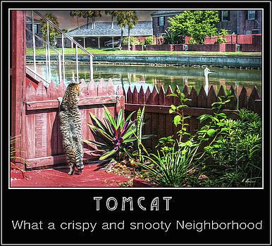 Tomcat Breakfast by Hanny Heim